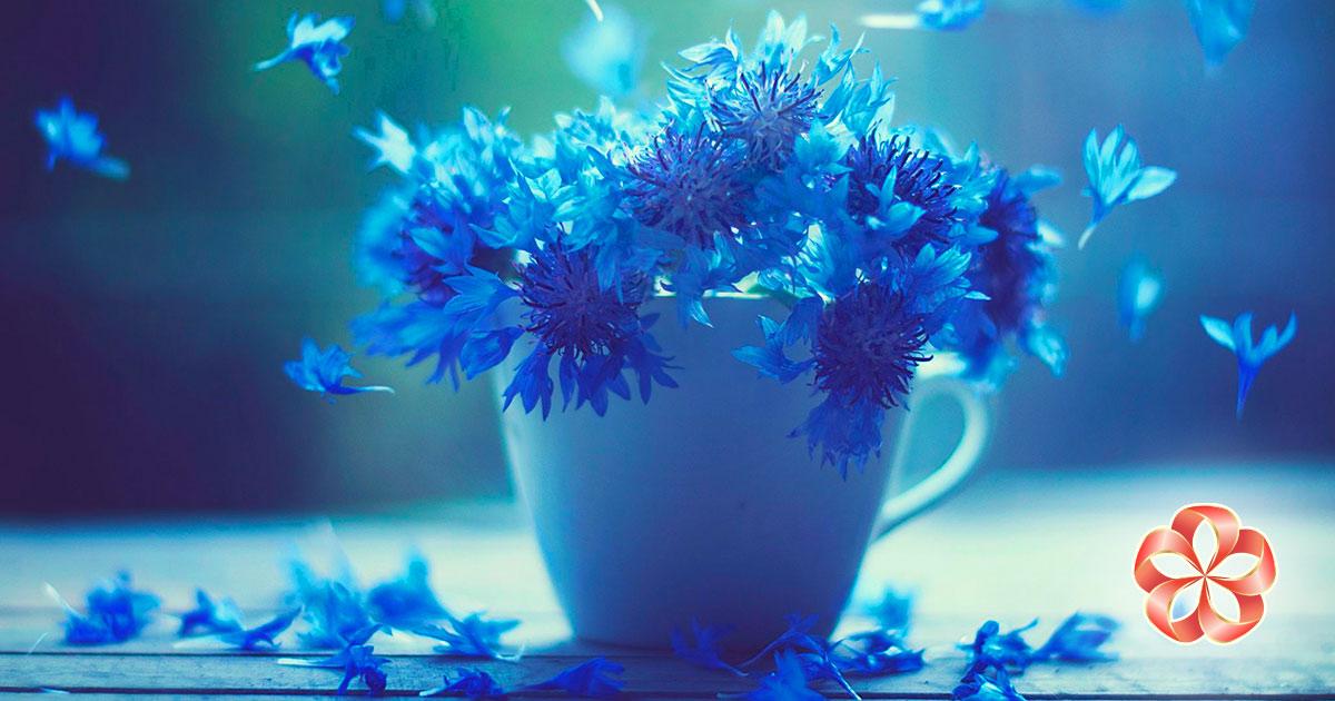 Подарки именинникам в августе и Девам по гороскопу. Команда «Русской флоры» каждую пятницу уходит на просторы — нарвать для вас полевых цветов.