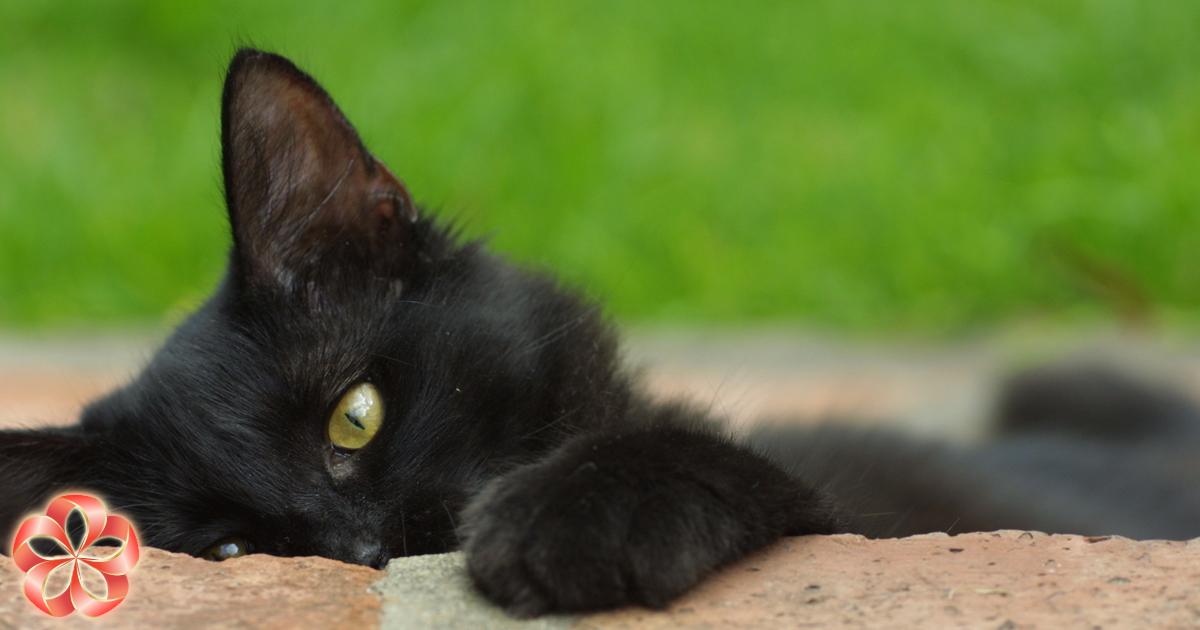 Праздники вноябре: День защиты черных кошек