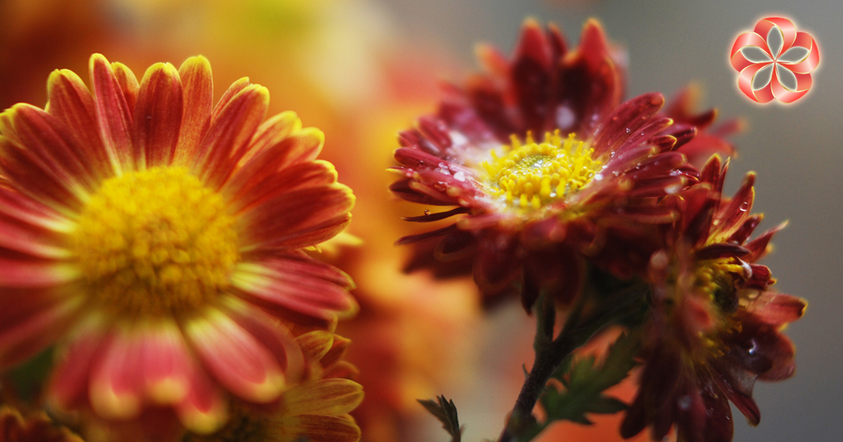 Праздники ноября: Всемирный день доброты ипрочие поводы вручить букет цветов.