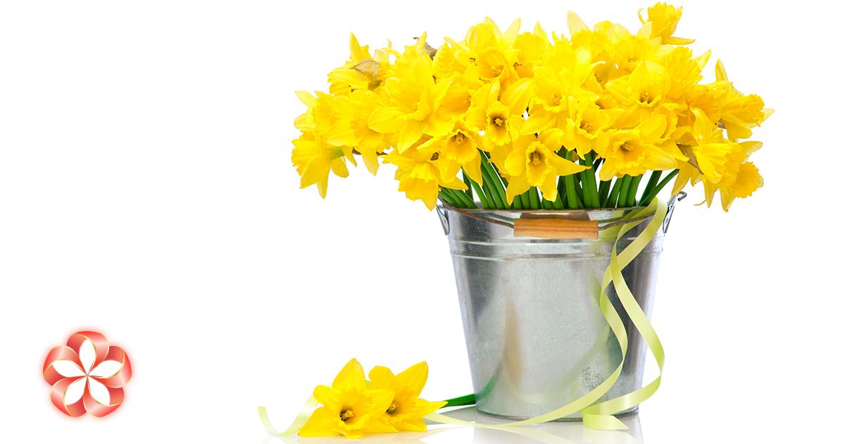 Подарок Овну иимениннику марта: символы месяца, цвета, цветы, камни.
