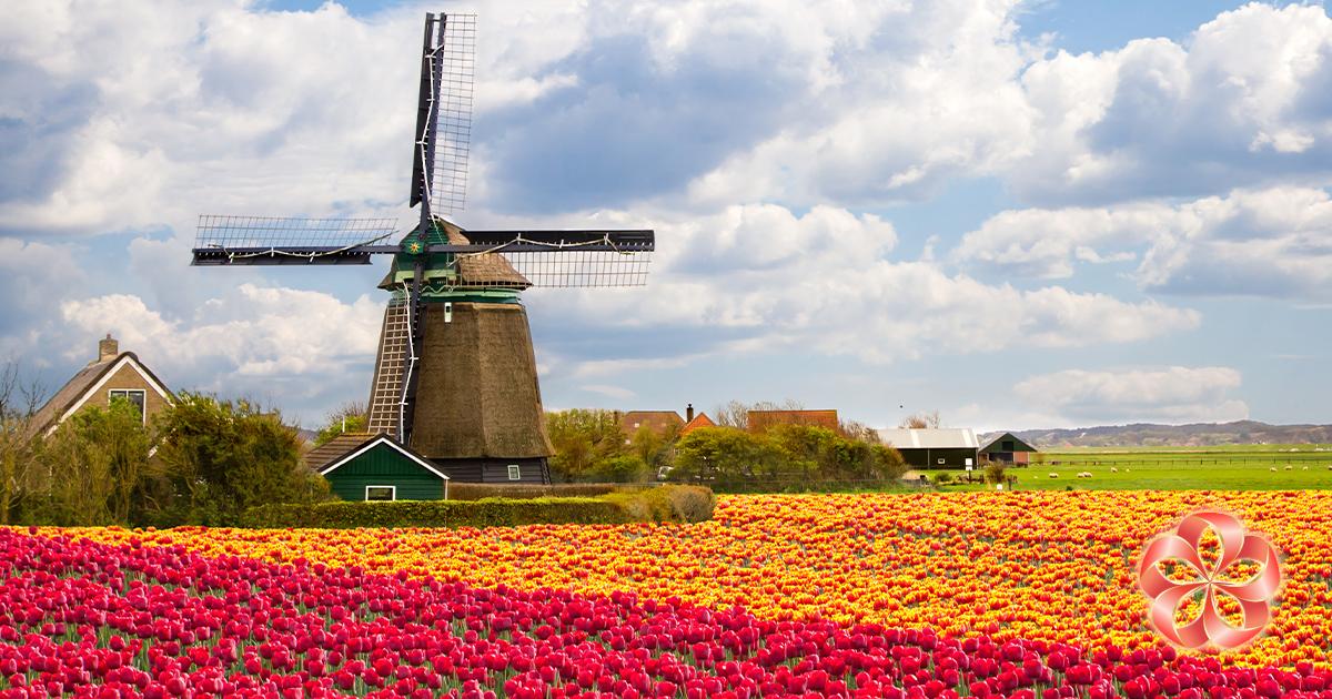 Сохраняем цветы свежими: тюльпанам необходима прохлада.