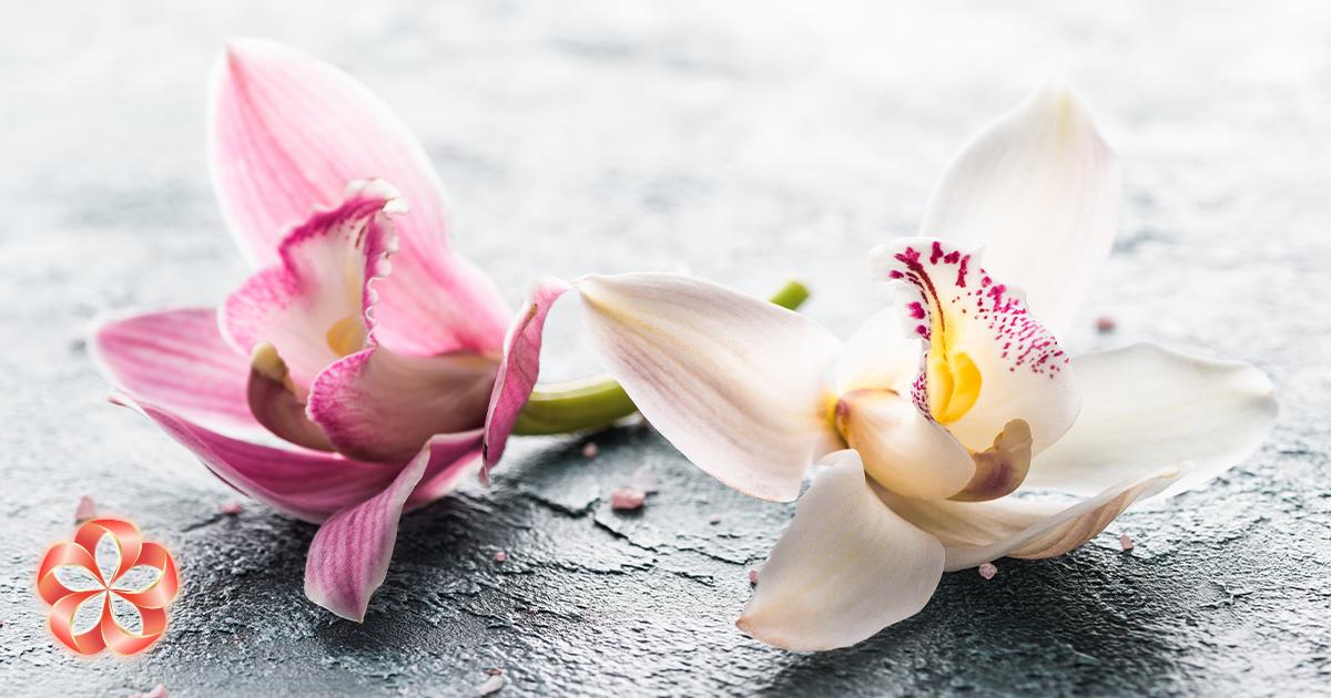 Продление жизни цветам: орхидею поливать редко, нообильно.